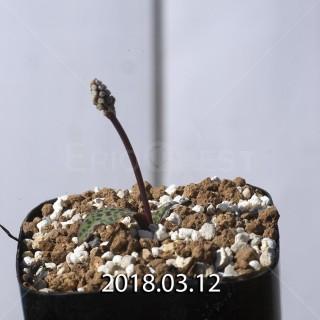 ドリミオプシス sp. EQ496 子株 8840