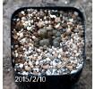 Conophytum pellucidum SB790 Offset 469