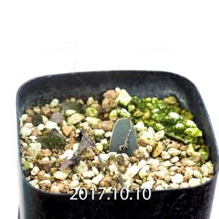 Ornithogalum sp. Seedling 6580