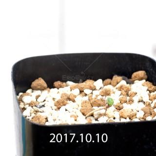 Eriospermum cervicorne MRO99 Seedling 6735