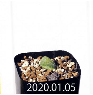 エリオスペルマム ドレゲイ IB13772 実生 15697
