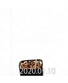 ラケナリア ウニフォリア ウニフォリア変種 実生 17510