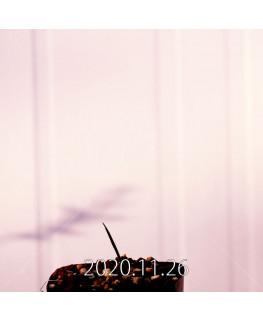 Moraea gigandra モラエア ギガンドラ EQ931  23114