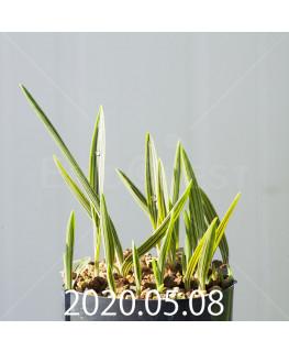 シラー アドラミー IB40759 5962