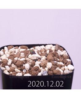 Lachenalia karoopoortensis ラケナリア カループールテンシス EQ636  23010