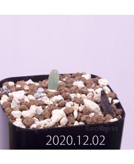 Lachenalia karoopoortensis ラケナリア カループールテンシス EQ636  23014