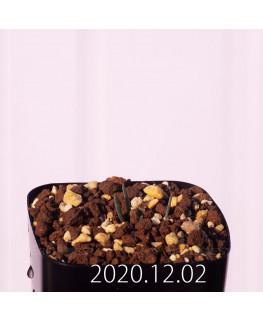 オーニソガラム ムルチフォリウム EQ857 子株 23407