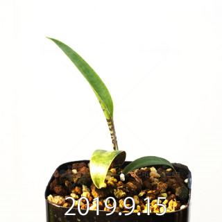 レデボウリア レボルタ EQ780 実生 15080