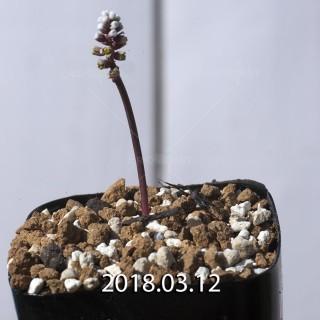 ドリミオプシス sp. EQ496 子株 8841