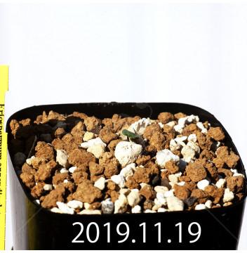 Eriospermum appendiculatum EQ807 Seedling 15726