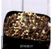Eriospermum dregei EQ605 Seedling 10430