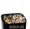 Drimia acarophylla IB13640 Offset 11199