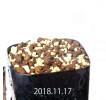 Gethyllis lanuginosa GS3103 Seedling 12150